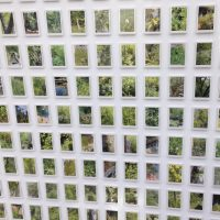 The Company of Everything Else - 130 photos of a rewilded garden in a company reception staff noticeboard